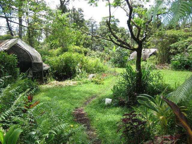 La permaculture votre jardin biologique et cologique for Jardin permaculture